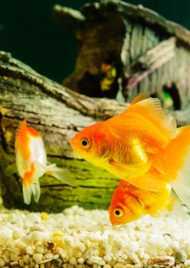 Comprar acuario a plazos y sin intereses