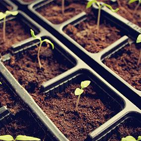 Cultivos y jardinería a plazos