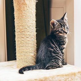 Rascadores y artículos para gatos